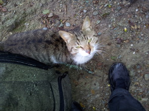 Кот на перевале Афдон